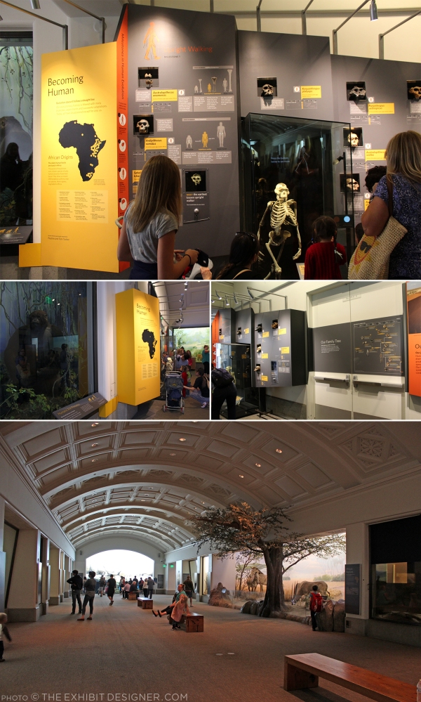 theexhibitdesigner-SF-academy-sciences_african-hall.jpg