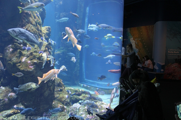 theexhibitdesigner-SF-academy-sciences_aquarium-cal-coast