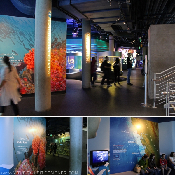 theexhibitdesigner-SF-academy-sciences_aquarium-cal-coast2