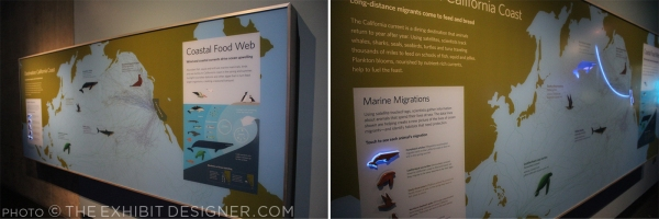 theexhibitdesigner-SF-academy-sciences_aquarium-cal-coast3