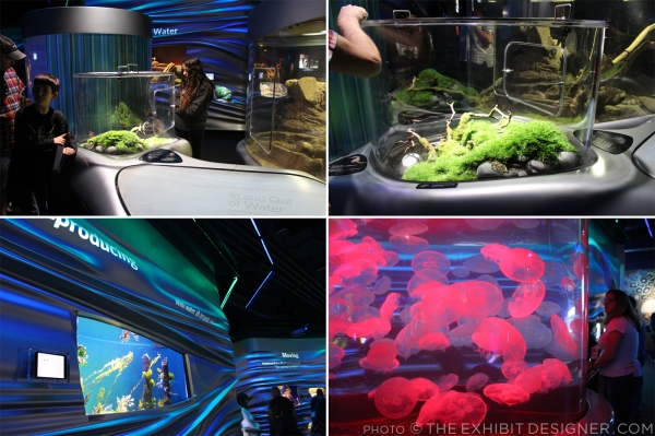 theexhibitdesigner-SF-academy-sciences_aquarium-water-planet2