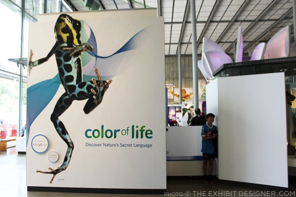theexhibitdesigner-SF-academy-sciences_color-of-life