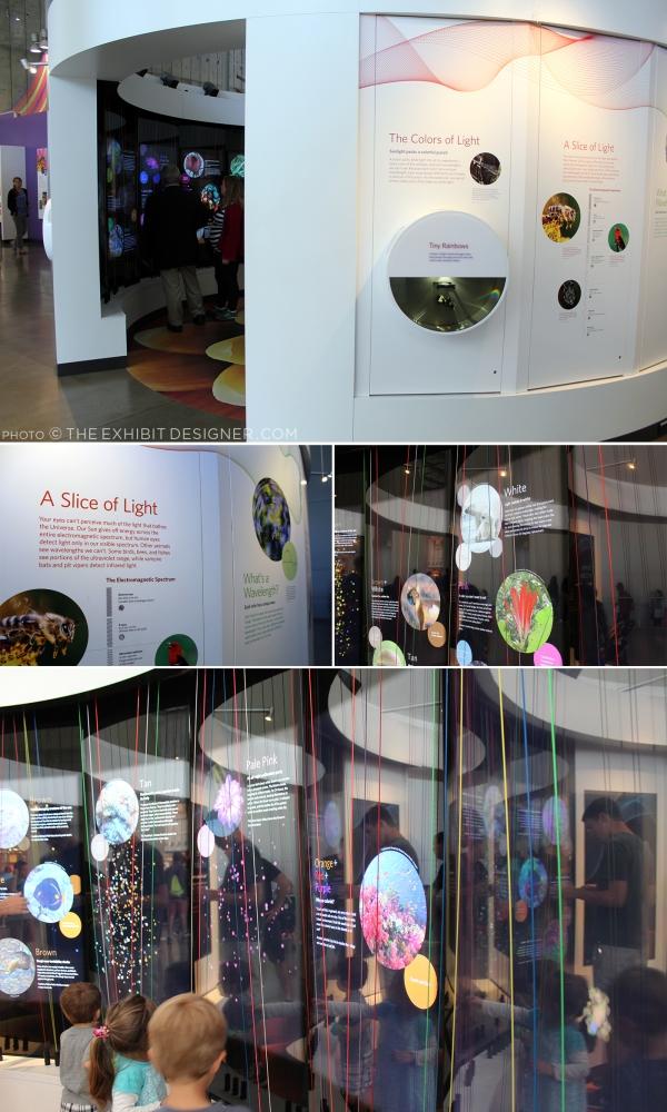 theexhibitdesigner-SF-academy-sciences_color-of-life7