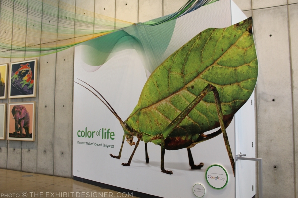 theexhibitdesigner-SF-academy-sciences_color-of-life9
