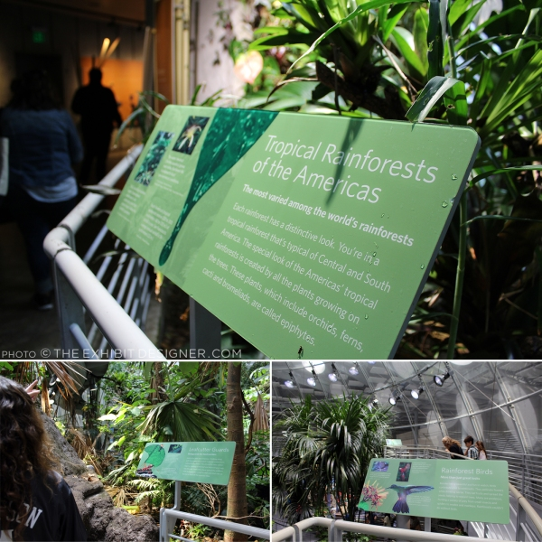 theexhibitdesigner-SF-academy-sciences_rainforest-animal-signs