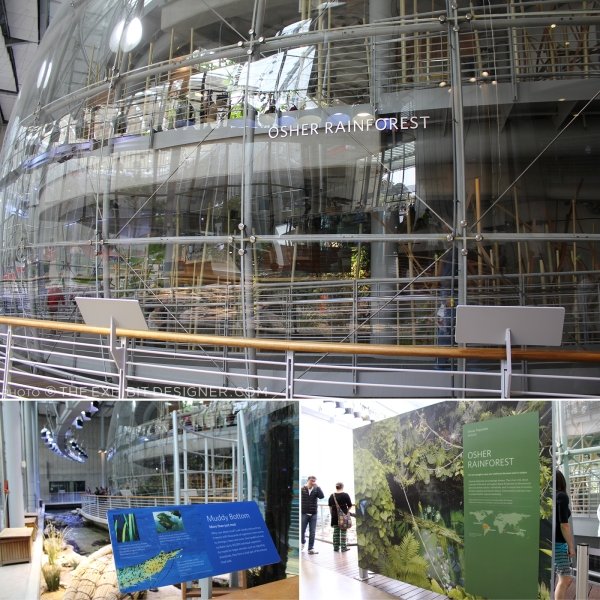 theexhibitdesigner-SF-academy-sciences_rainforest-dome