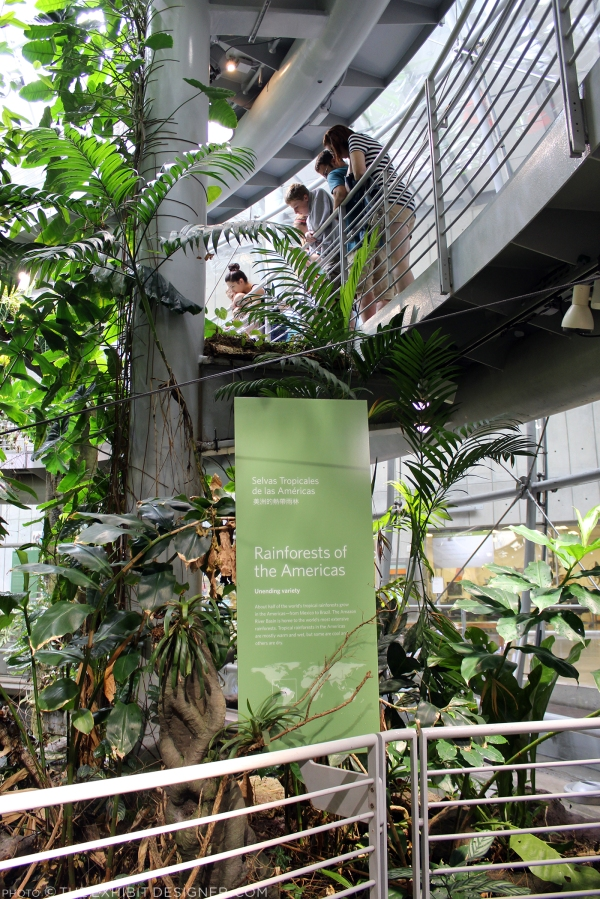 theexhibitdesigner-SF-academy-sciences_rainforest-levels
