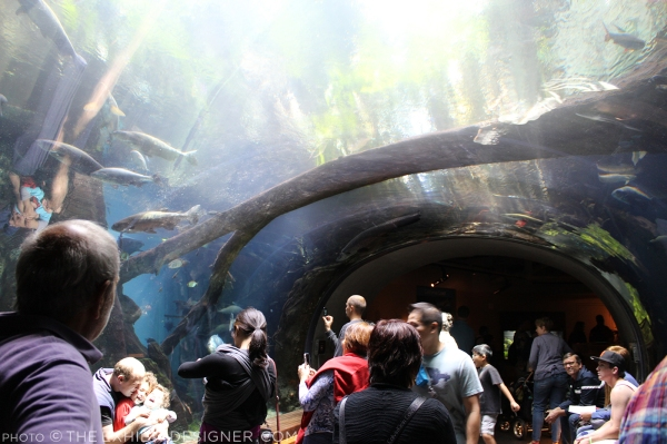 theexhibitdesigner-SF-academy-sciences_rainforest-dome-lower1.jpg