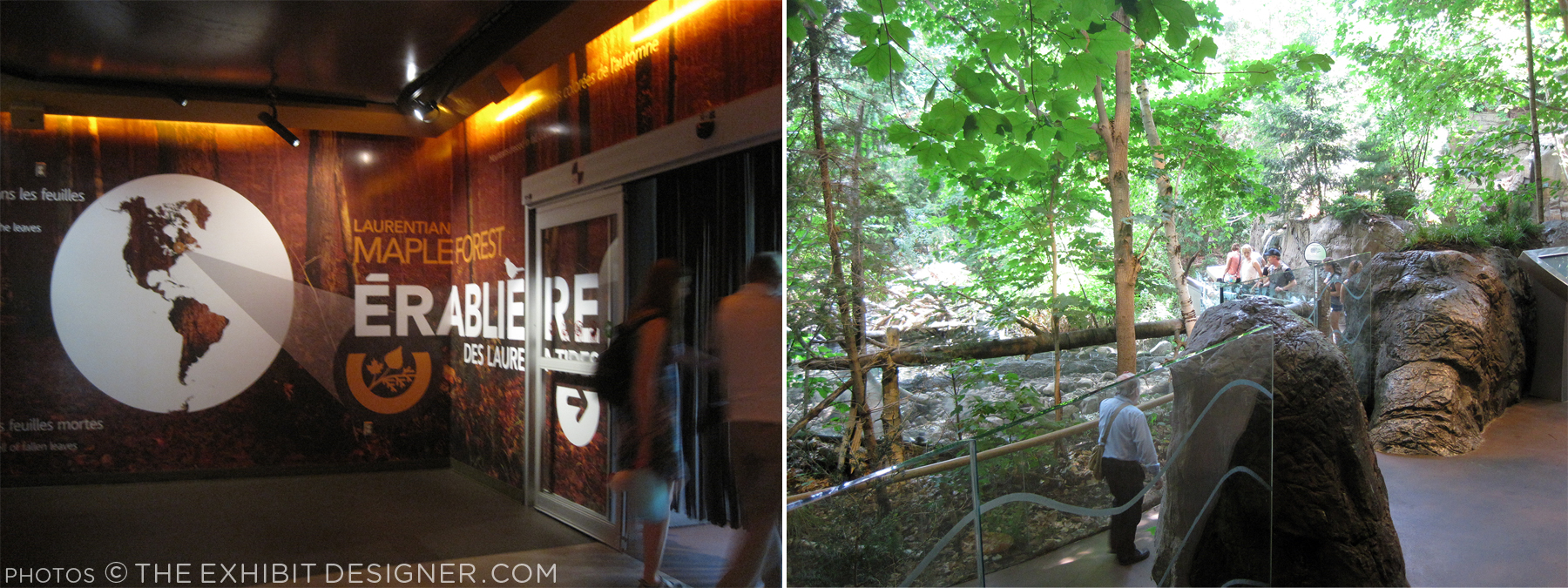 theexhibitdesigner_biodome-maple-forest