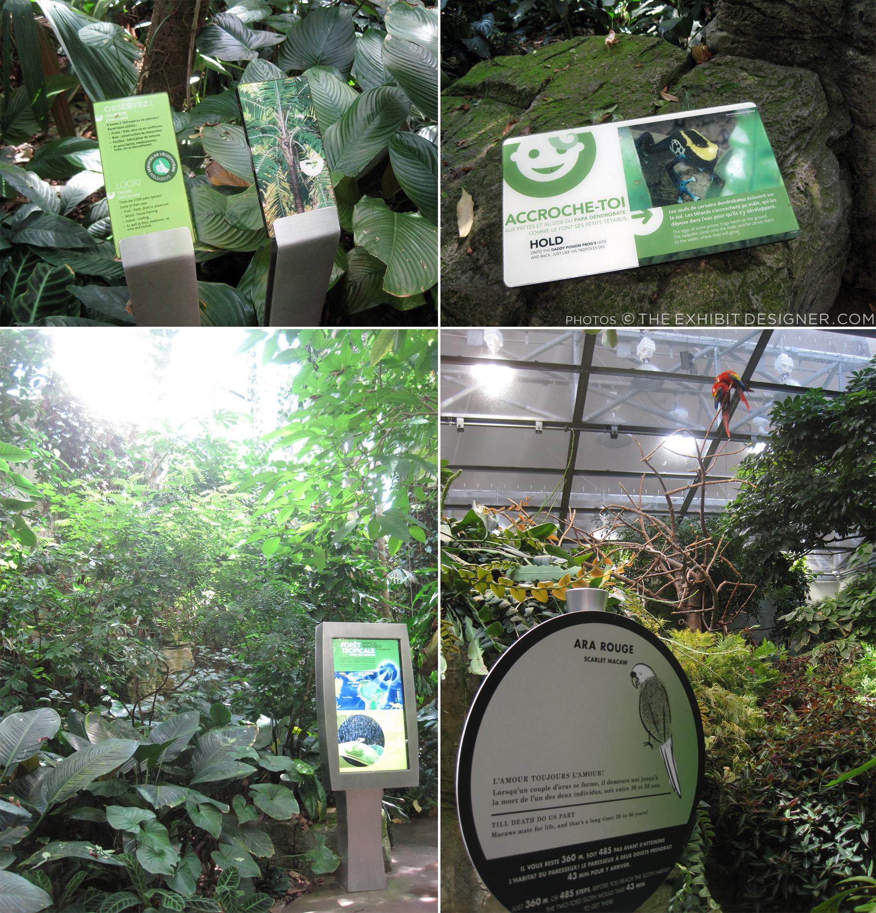 theexhibitdesigner_biodome-tropical-rainforest-graphics