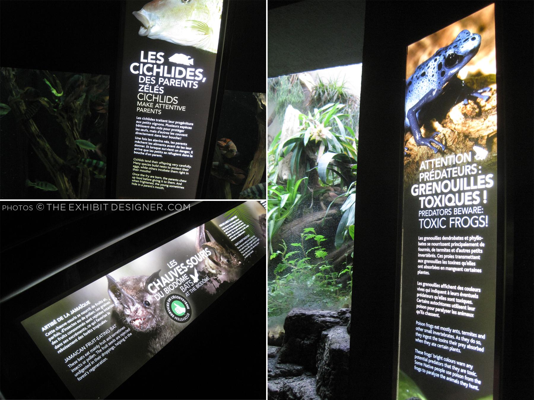 theexhibitdesigner_biodome-tropical-rainforest-night-exhibit