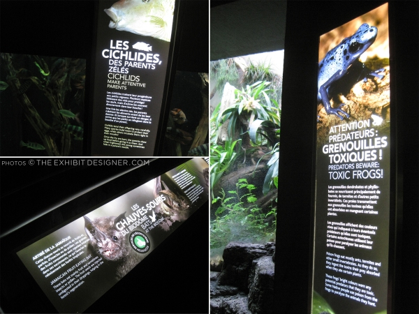 theexhibitdesigner_biodome-tropical-rainforest-night-exhibit