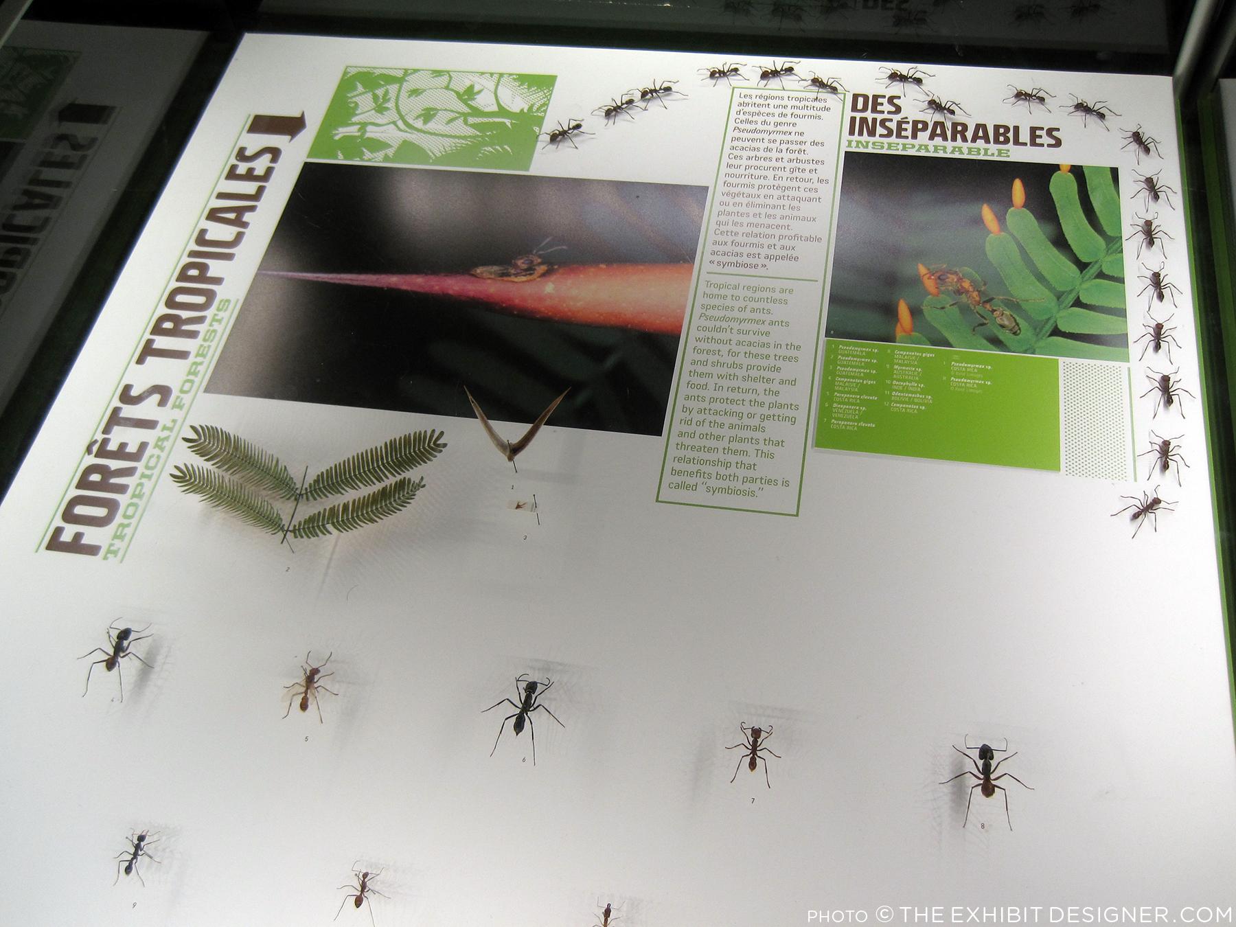 theexhibitdesigner_insectarium-case-graphics-fun