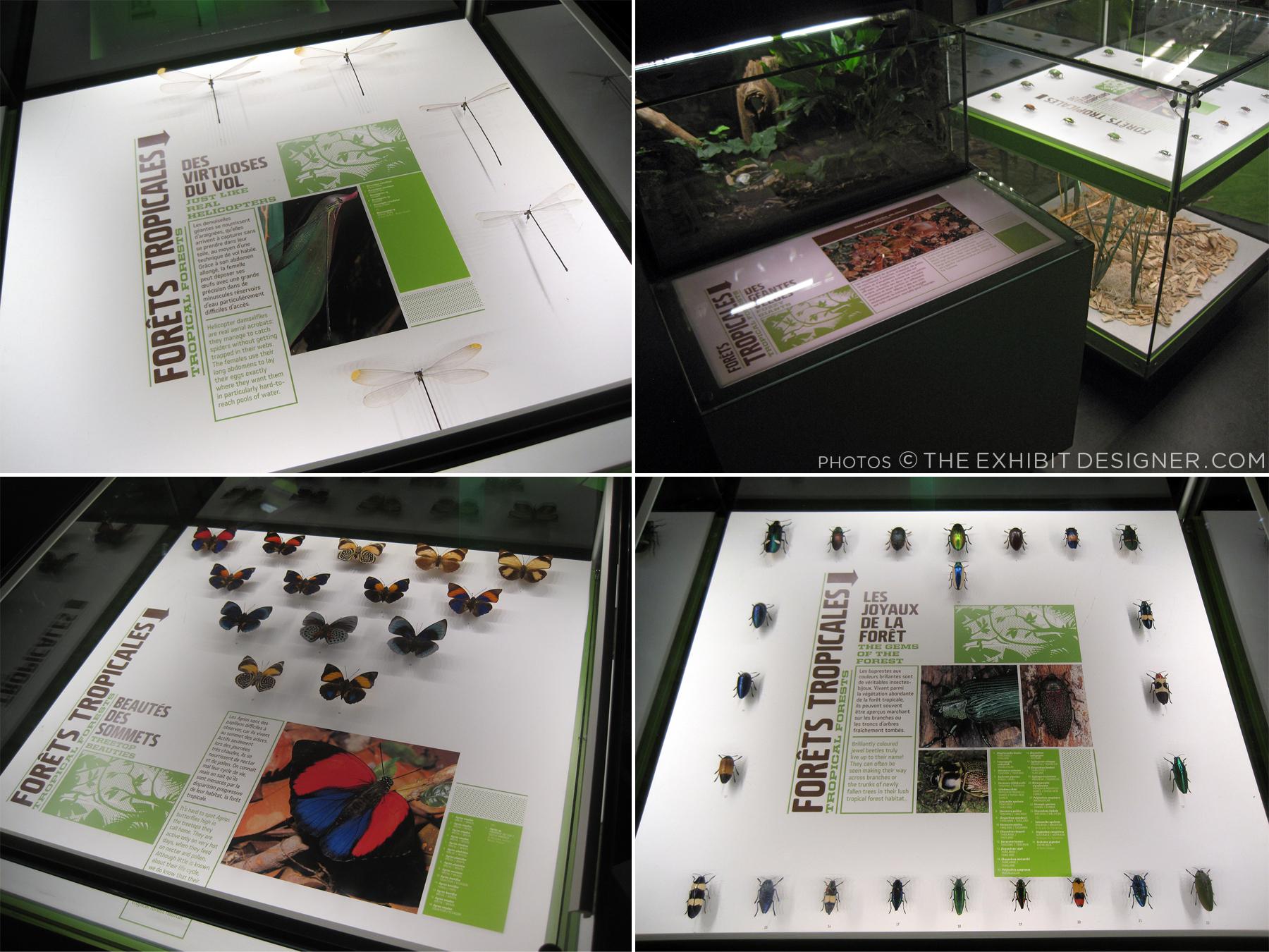 theexhibitdesigner_insectarium-case-graphics1