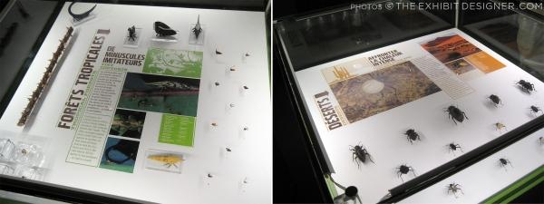 theexhibitdesigner_insectarium-case-graphics2