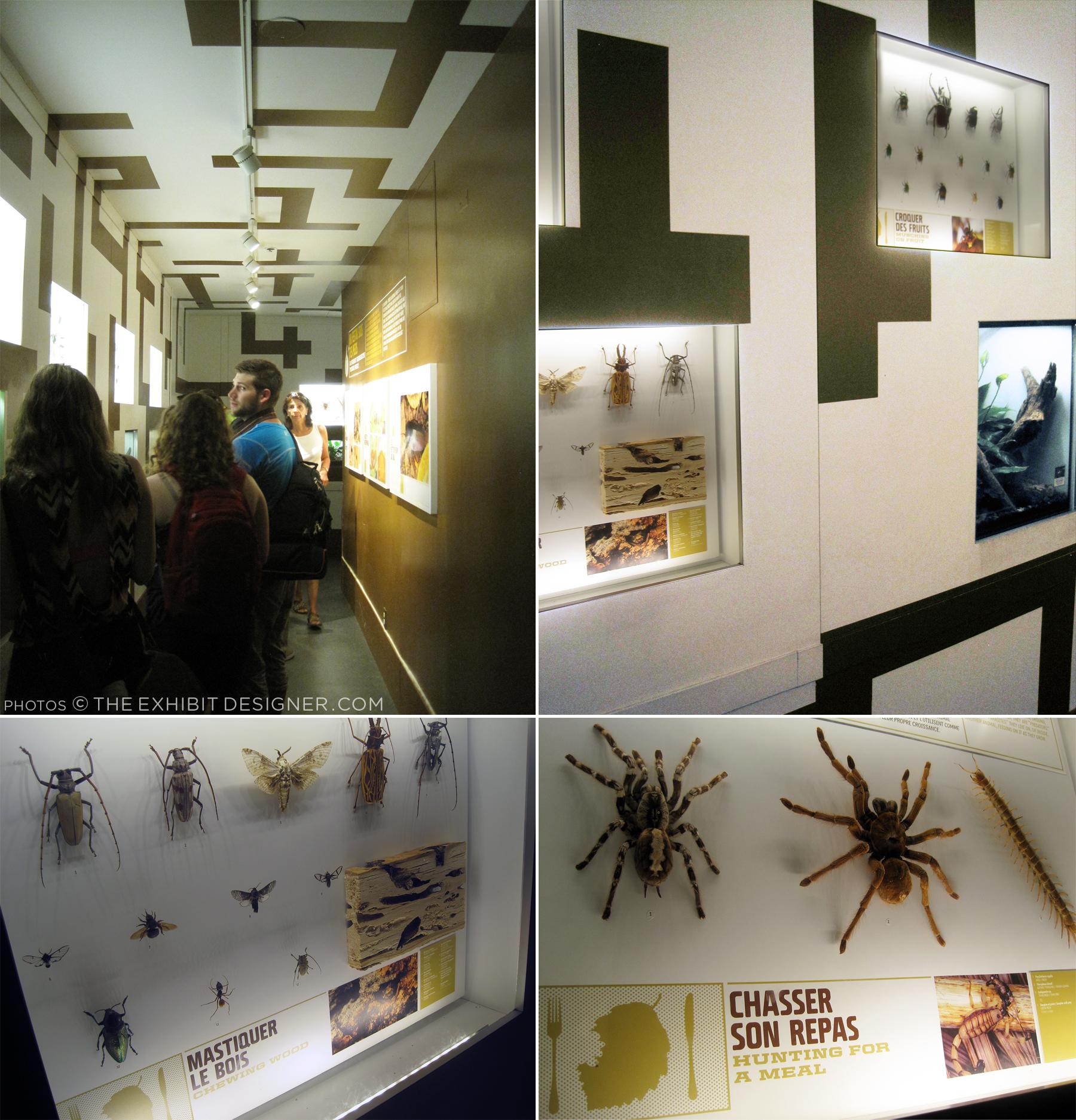 theexhibitdesigner_insectarium-different-tastes