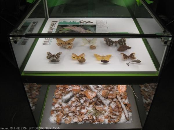theexhibitdesigner_insectarium-faux-terrarium