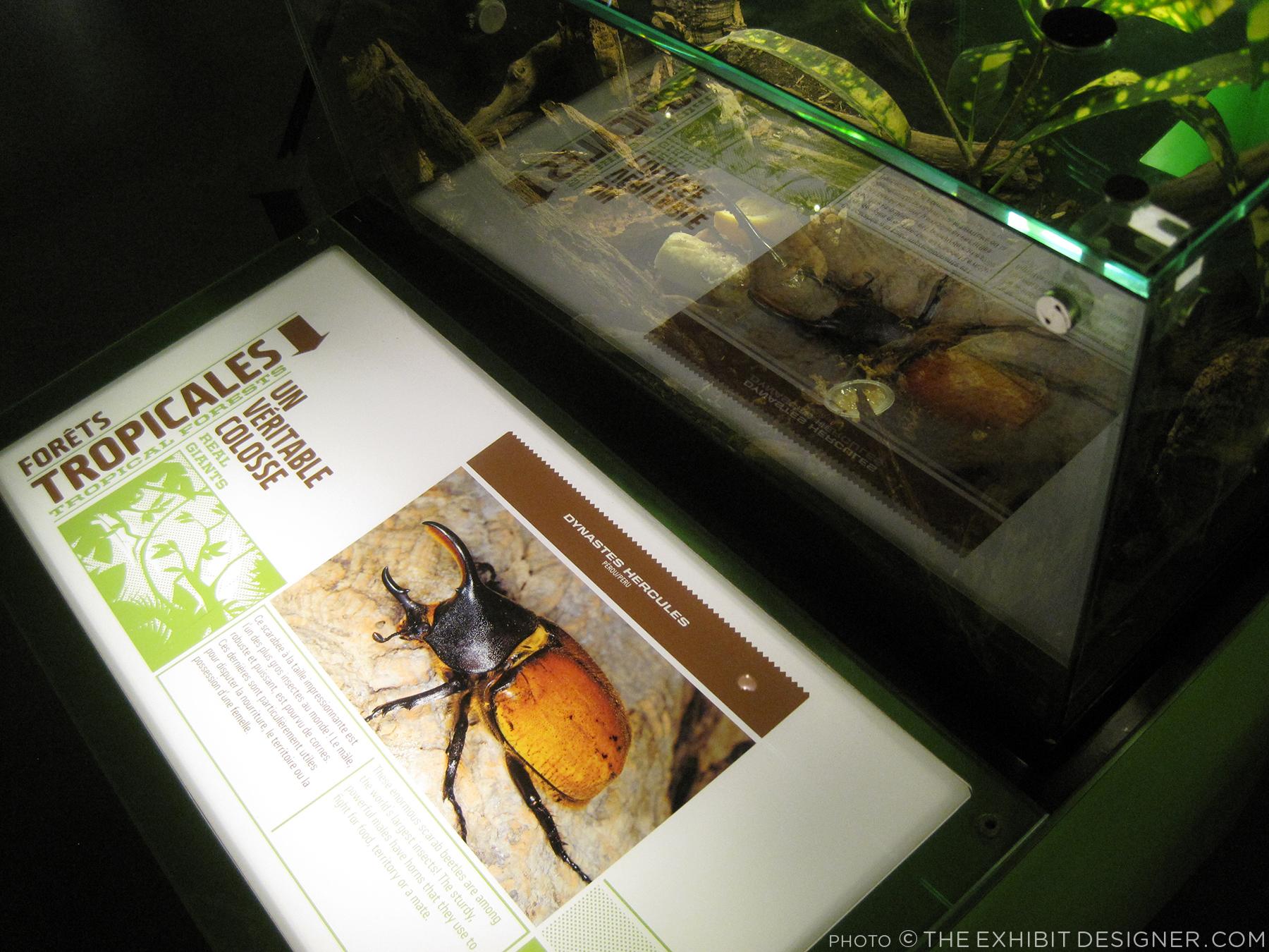 theexhibitdesigner_insectarium-terrarium